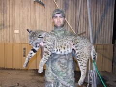 1415 Season Bobcat