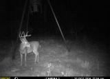 feeder cam 2